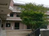 桜の木と中庭